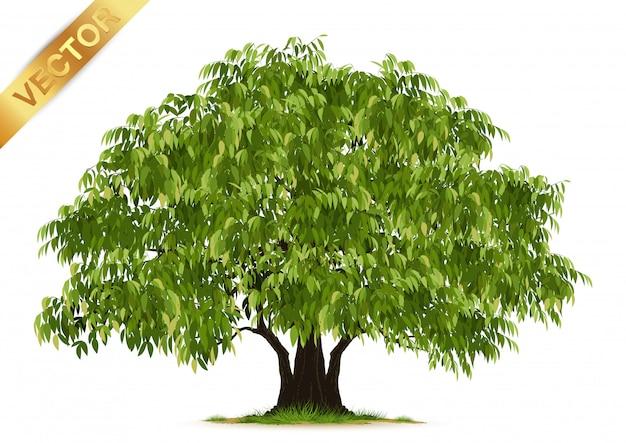 Realistyczne drzewo na białym tle