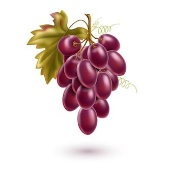 Realistyczne kiść czerwonych winogron z dojrzałymi jagodami i liśćmi. świeża winorośl do projektowania wyrobów winiarskich.
