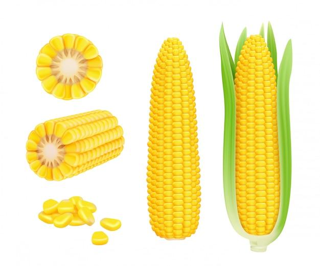 Realistyczne kolby kukurydzy. żółty konserwy świeże kukurydziane warzywa zbiorów kukurydza wektor szablon