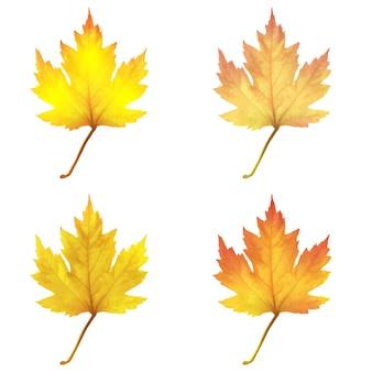 Realistyczne liście klonu na białym tle