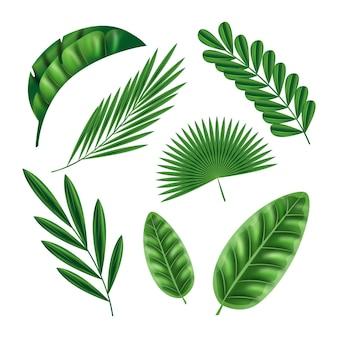 Realistyczne liście w różnych kształtach