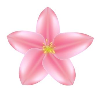 Realistyczne piękne 3d sprind i ikona różowy kwiat lato