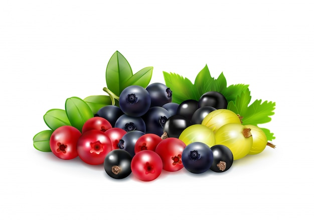 Realistyczne pojęcie jagodowe mix