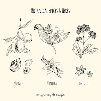 Realistyczne ręcznie rysowane kolekcja szkice przyprawy i zioła