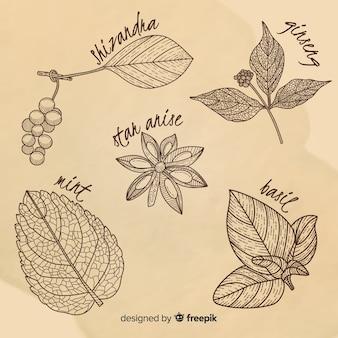 Realistyczne ręcznie rysowane botaniczne przyprawy i zioła