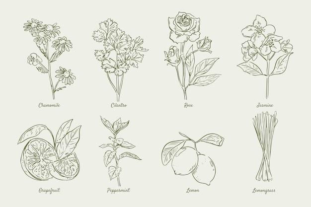 Realistyczne ręcznie rysowane kolekcja ziół olejków eterycznych