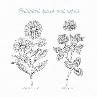 Realistyczne ręcznie rysowane przyprawy i zioła botaniczne