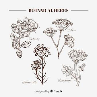 Realistyczne ręcznie rysowane przyprawy i zioła