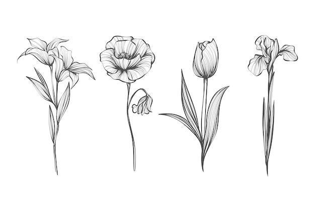 Realistyczne ręcznie rysowane rocznika botanika zestaw kwiatów