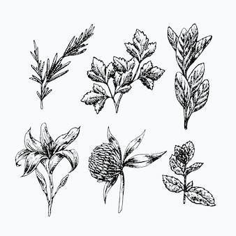 Realistyczne ręcznie rysowane zioła i dzikie kwiaty
