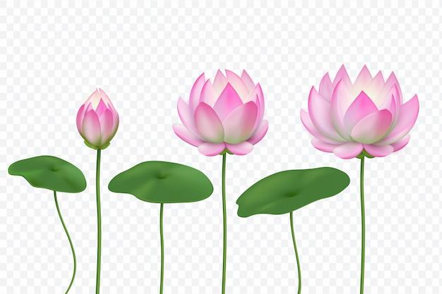 Realistyczne różowe kwiaty lotosu