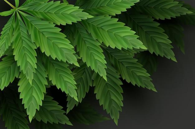 Realistyczne tło liści konopi