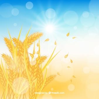 Realistyczne tło pszenicy