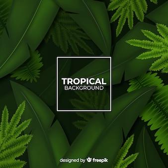 Realistyczne tropikalne tło