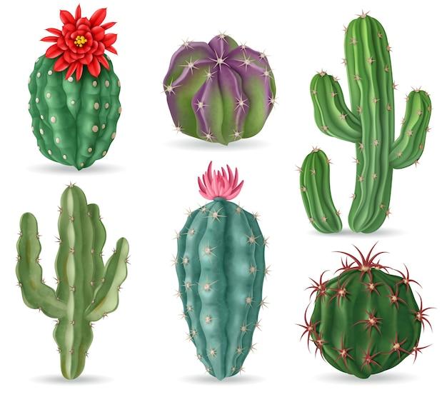 Realistyczny kaktus