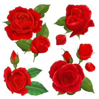Realistyczny kwiat róży zestaw ikon