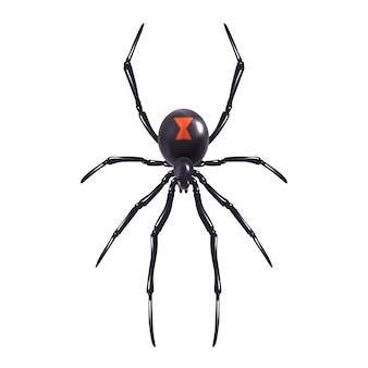 Realistyczny pająk na białym tle