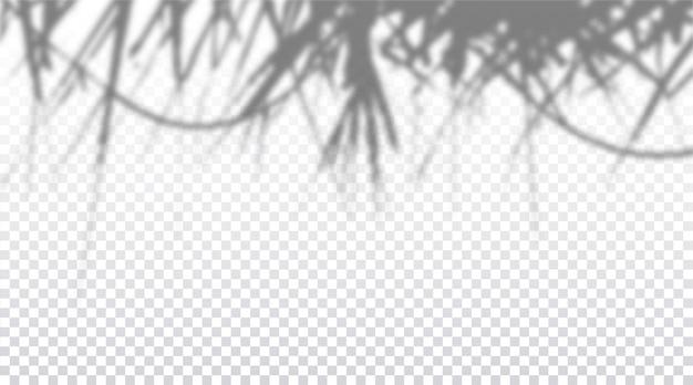 Realistyczny przezroczysty cień na ścianie, efekt nakładki egzotycznych liści palmowych