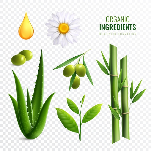Realistyczny przezroczysty zestaw ikon składników kosmetyków organicznych