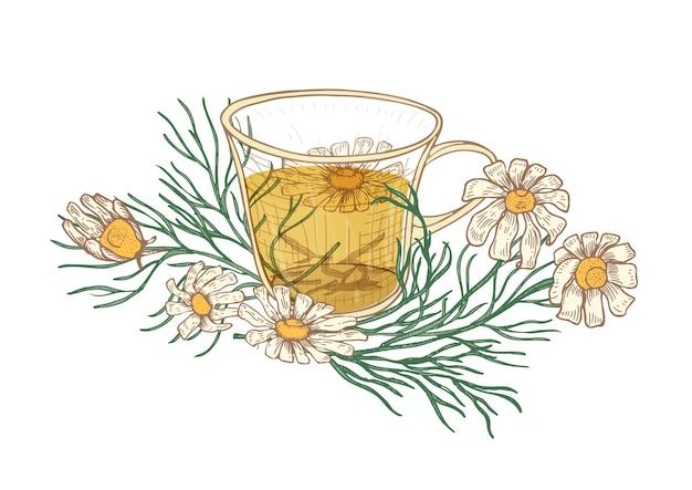 Realistyczny rysunek filiżanki herbaty, kwiatów i liści rumianku na białym tle