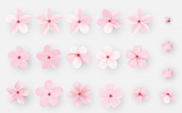 Realistyczny sakura lub kwiat wiśni