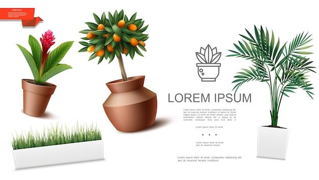 Realistyczny szablon roślin doniczkowych