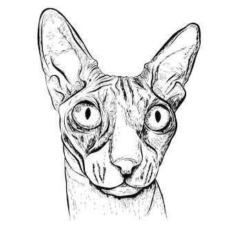 Realistyczny szkic kota.