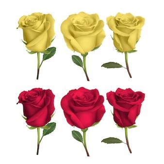 Realistyczny wzór róży na białym tle na tle