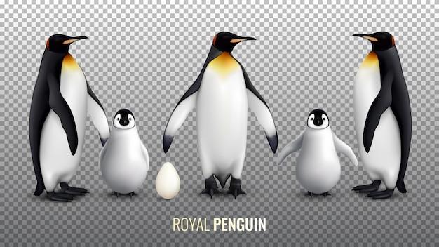 Realistyczny zestaw royal pingwina z pisklęm jaja i dorosłymi ptakami na przezroczystym