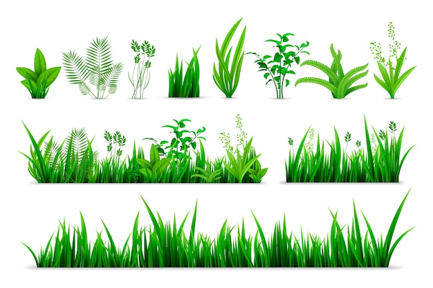 Realistyczny zestaw trawy wiosną. kolekcja zielonych świeżych roślin w stylu realizmu lub sezonowych zielonych ziół botanicznych w ogrodzie