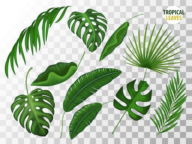 Realistyczny zestaw tropikalnych liści. monstera, dłoń, paprociowy krzak na przezroczystym tle.