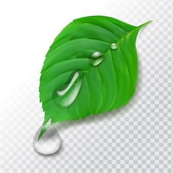 Realistyczny zielony liść z kroplami wody. piękna czysta rosa po deszczu