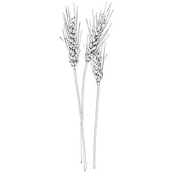 Ręczne rysunki kłosów pszenicy. grawerowanie vintage ilustracja symbol ochrony i bezpieczeństwa. antyczne vintage grawerowanie ilustracja