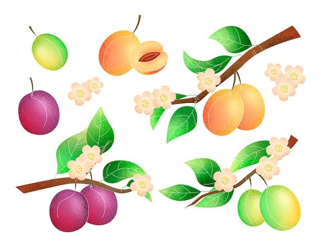 Ręcznie malowana ilustracja drzewa śliwy