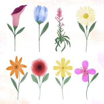 Ręcznie malowana kolekcja kwiatów akwarelowych