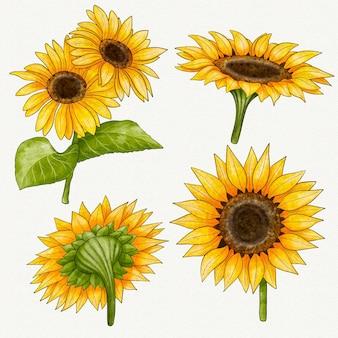 Ręcznie malowana kolekcja słoneczników akwarelowych