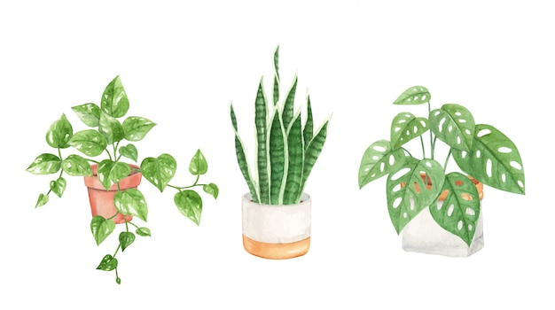 Ręcznie malowane akwarelowe rośliny domowe