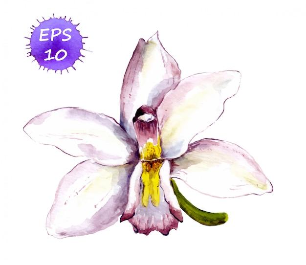 Ręcznie malowany kwiat białej orchidei. wektor