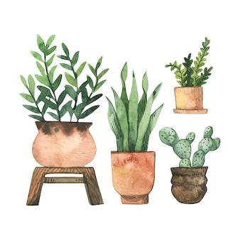 Ręcznie malowany zestaw roślin doniczkowych akwarela