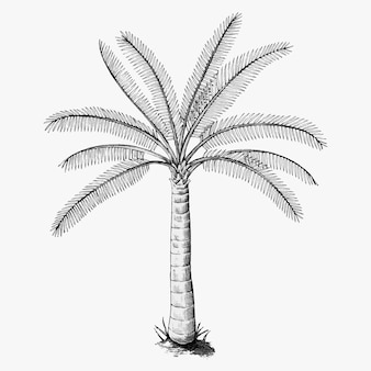 Ręcznie narysowana palma