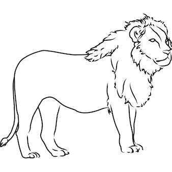 Ręcznie narysowany ręcznie rysowane lew wektor