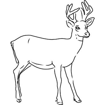 Ręcznie naszkicowane, ręcznie rysowane wektor jelenia