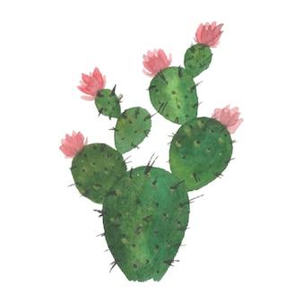 Ręcznie robiona akwarela kaktusów