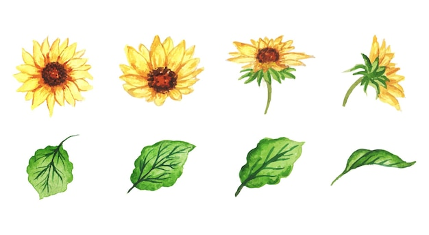 Ręcznie robiony zestaw słoneczników akwarela
