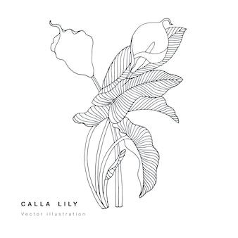 Ręcznie rysować ilustracja kwiaty lilii calla. wieniec kwiatowy. botaniczna karta kwiatowy na białym tle.