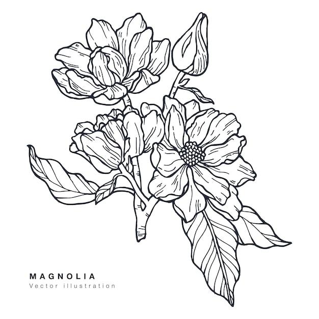 Ręcznie rysować ilustracja kwiaty magnolii. wieniec kwiatowy. botaniczna karta kwiatowy na białym tle.