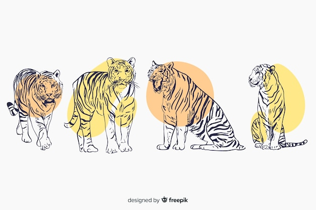 Ręcznie rysowana kolekcja dzikiego tygrysa