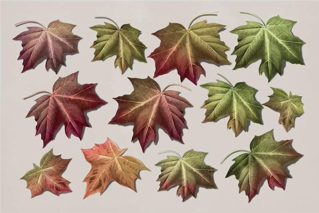 Ręcznie rysowana kolekcja jesiennych liści klonu