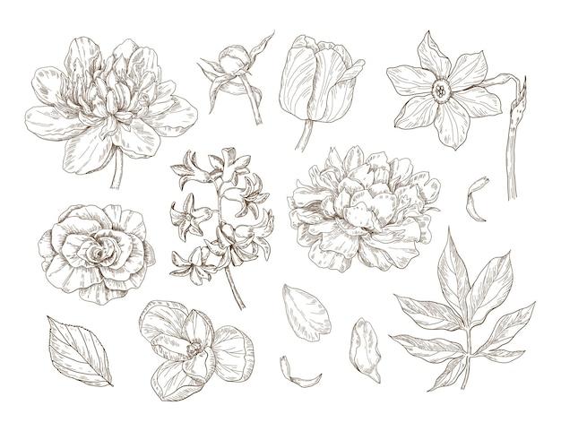 Ręcznie rysowana kolekcja kwiatów z piwoniami tulipany żonkile krokusy róże