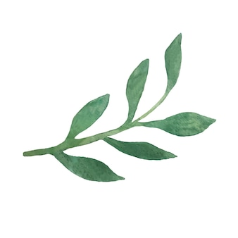 Ręcznie rysowana roślina akwarelowa kwiatowa gałąź w minimalistycznym stylu